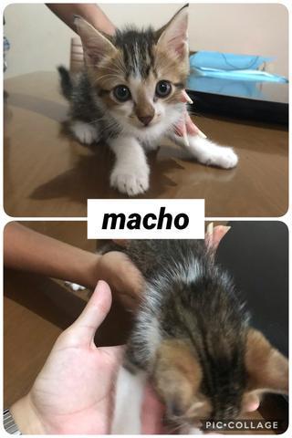 Adoção responsável - gato filhote