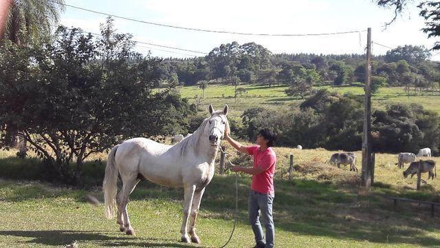 Cavalo mangalarga mineiro marcha batida registrado garanhão