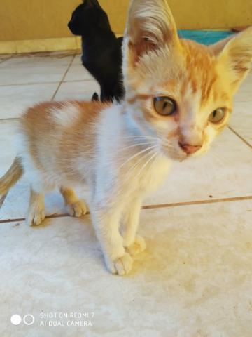 Doação de 2 gatinhos, 1 com 4 meses outro com 2 meses