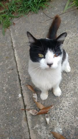 Doação de gato castrado urgente