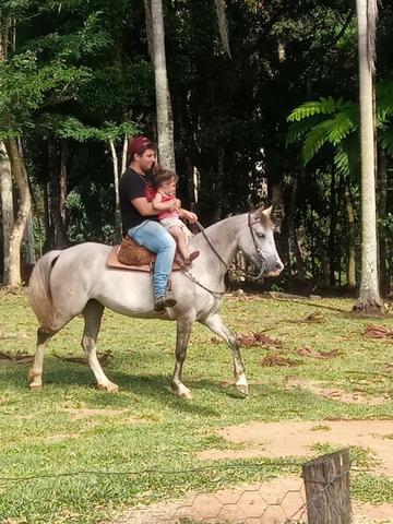 Egua crioula