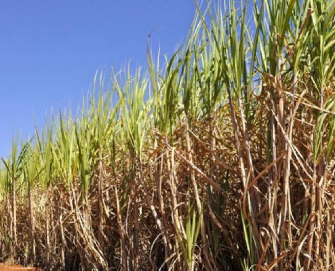 Fazenda 520 alqueires com cana, terra plana.