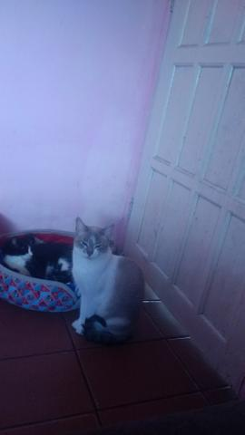 Gatos p adoção responsável