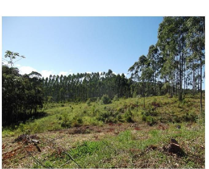 Terreno rural medindo 30.000 m² para construir um belo