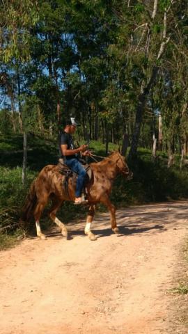 Vendo cavalo manso barato