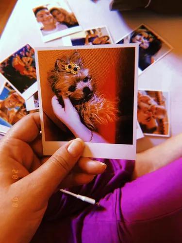Fotos polaroide - revelação de fotos polaroide