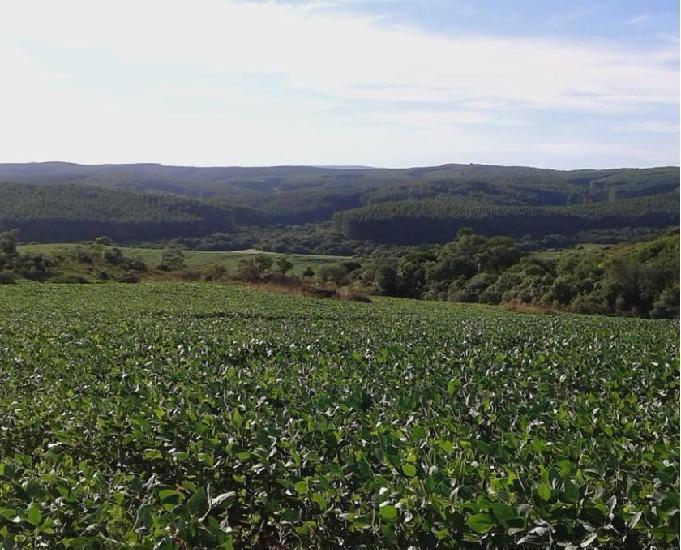 Fazenda 293 ha soja e pecuária em pantano grande