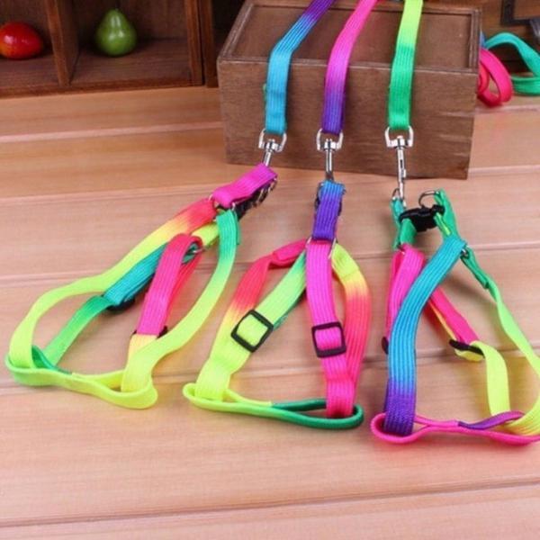 Coleira hund pet colors