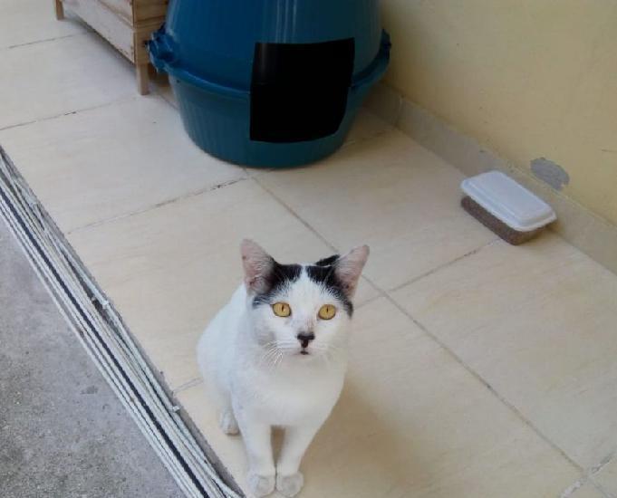 Gato macho para adoção