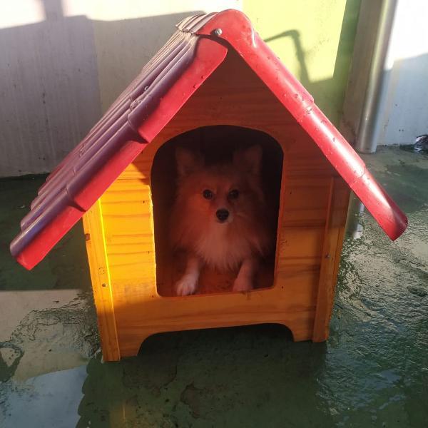 Casinha de madeira para cachorro de porte pequeno