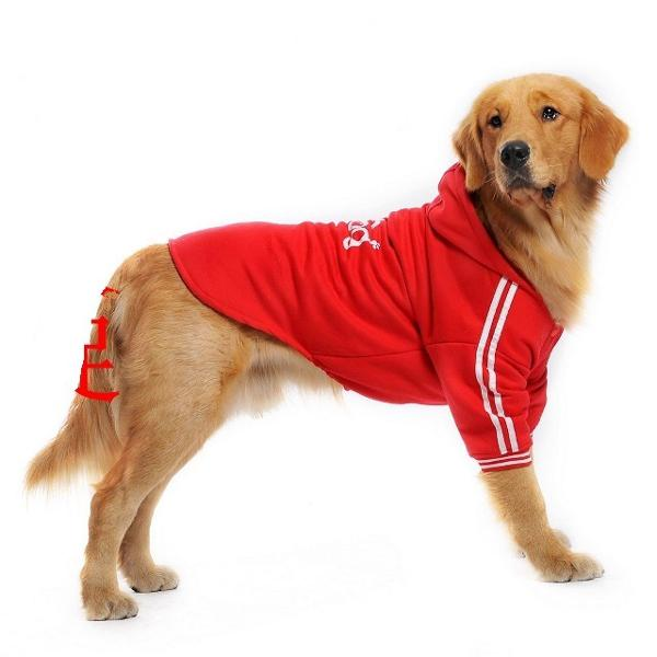 Moleton adidog cães cachorro grande porte labrador golden