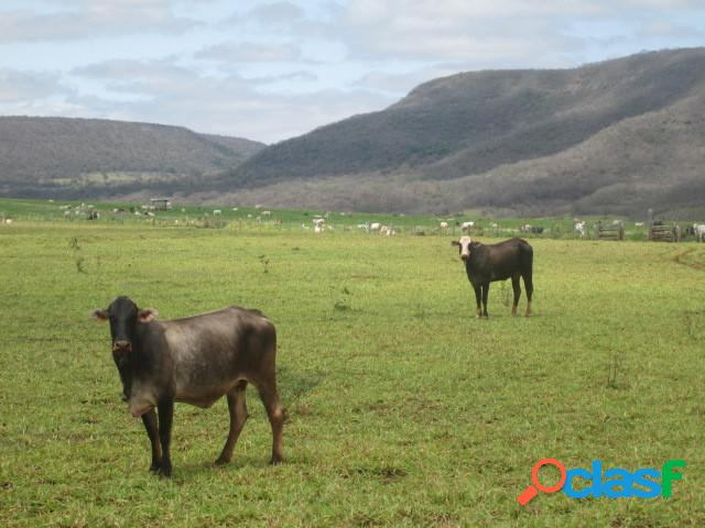 Fazenda - venda - campo grande - ms - zona rural