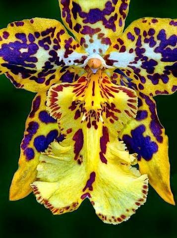 Curso completo sobre orquídeas