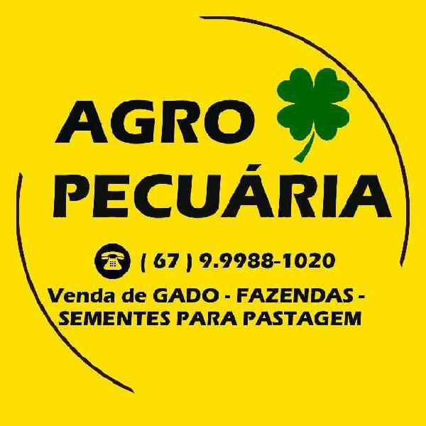 Fazendas em ms, gado e sementes para pastagem
