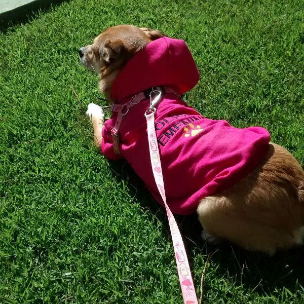 Moletom rosa pink pet
