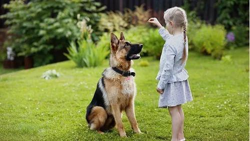 10 guias de adestramento canino - curso prático.
