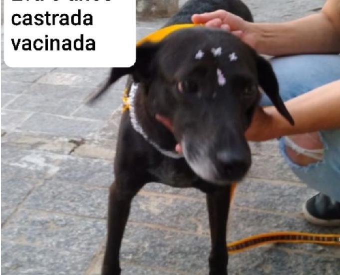Eva: uma fofura de cachorrinha!