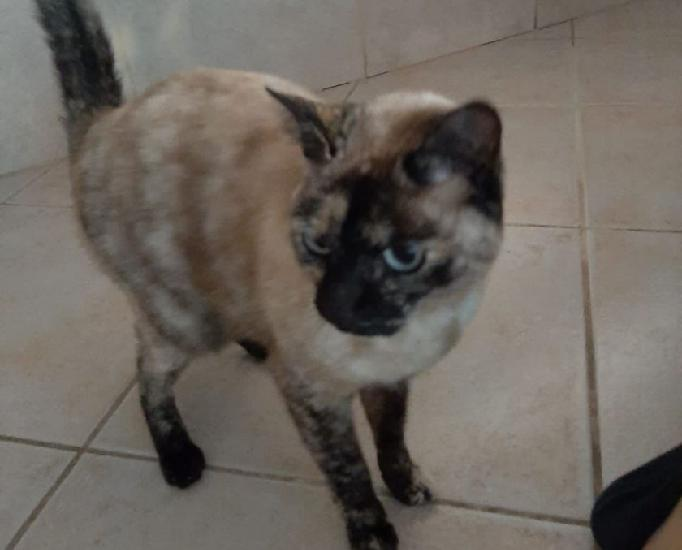 Nina gatinha linda precisa de lar seguro