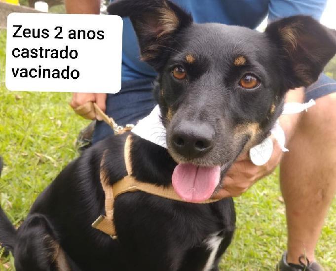 Zeus: um cãozinho muito bonzinho e alegre espera por você!