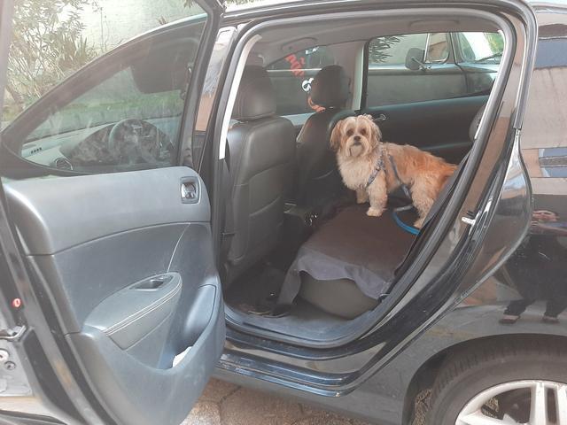 Taxi dog (transporte de dog com todo conforto e segurança q