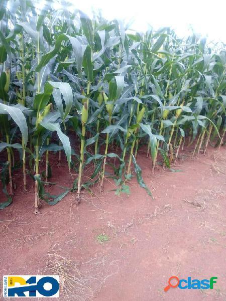 Fazenda para arrendamento área de plantio dois irmãos to 900 ha