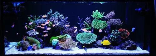 Kit lâmpada 42cm barra tubo led iluminação aquário