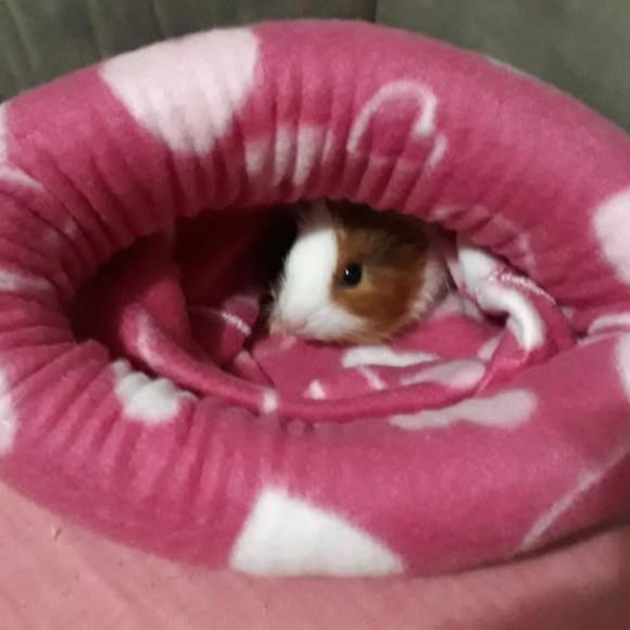 Alcofa porquinho da índia/hamster-cama pet-tam g