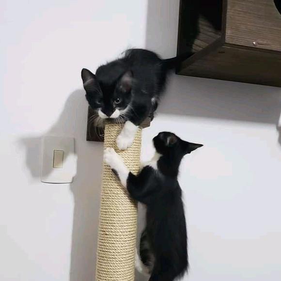 Arranhador de parede para gatos 1,2m