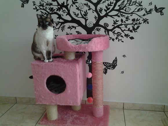 Arranhador para gatos caixa com cama