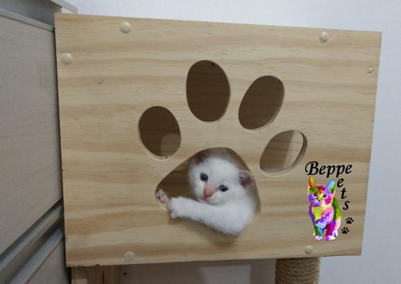 Caixa / nicho / box p para gatos