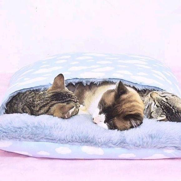 Cama bag para gatos