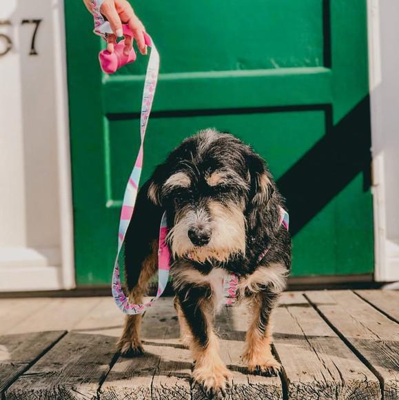 Peitoral e guia para cães de pequeno porte - modelo