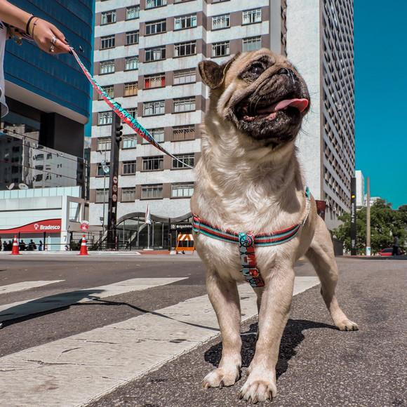 Peitoral para cachorros com guia - médio porte - marinheiro