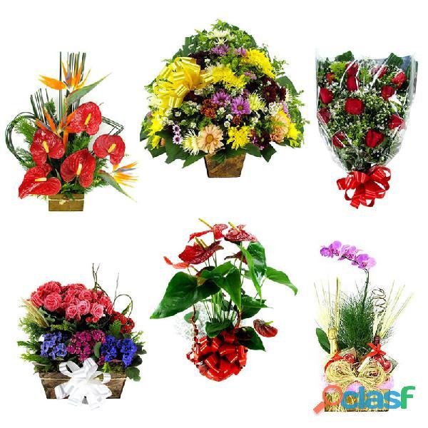 Capim branco mg floricultura flores cesta de café da manhã e coroas de flores entrega