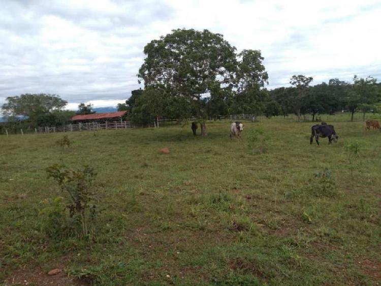 Fazenda para venda em cuiabá, rodovia br 070, 2