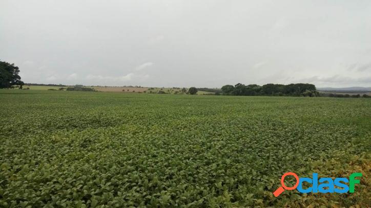 Fazenda em piracanjuba 268 hectares de cultura soja