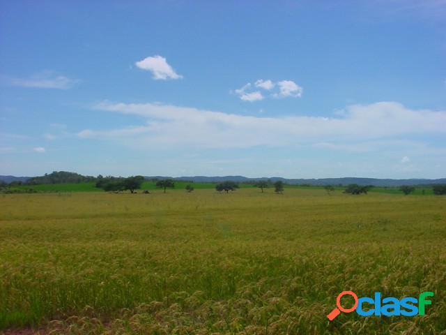Fazenda - venda - araguaina - to - rural