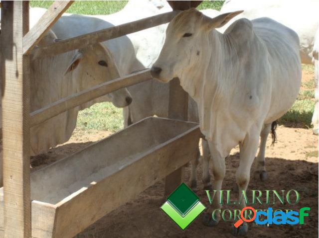 Fazenda para gado e cultura em baldim