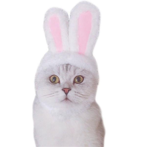 Orelha de coelho para pet/ cachorro/ gato tamanho pequeno