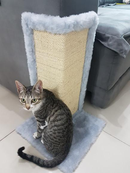 Arranhador gato canto de sofá