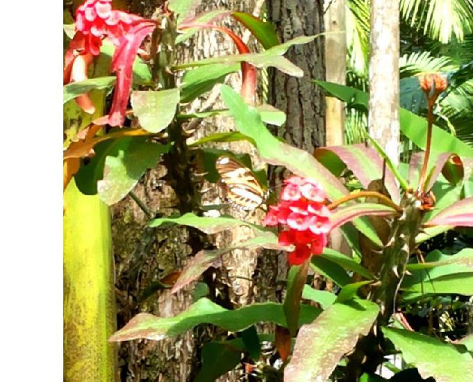 Sítio nova trento com riacho e árvores frutíferas