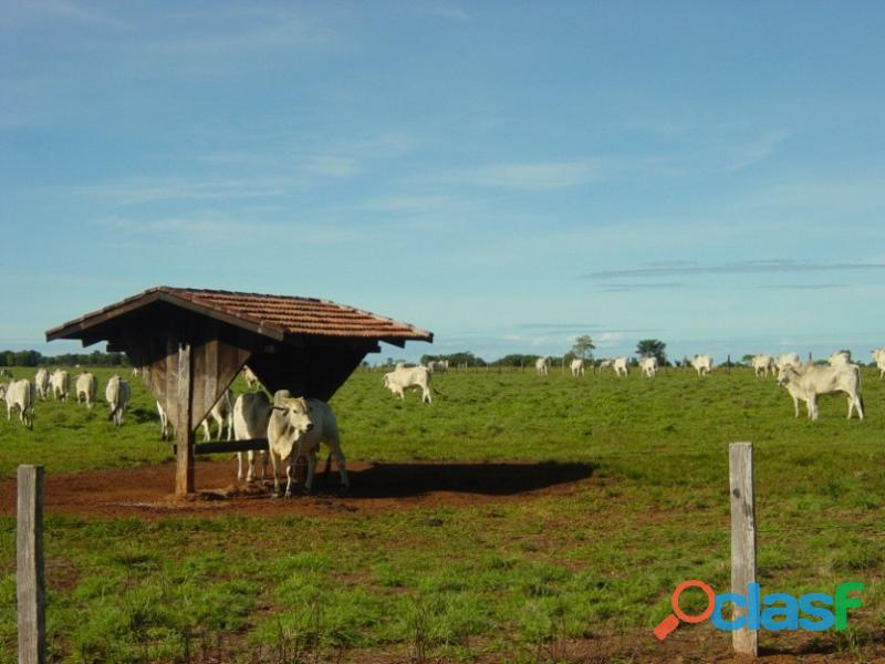 290 Aqs Excelente Pra Gado Bem Montada São Miguel Do Araguaia GO 1