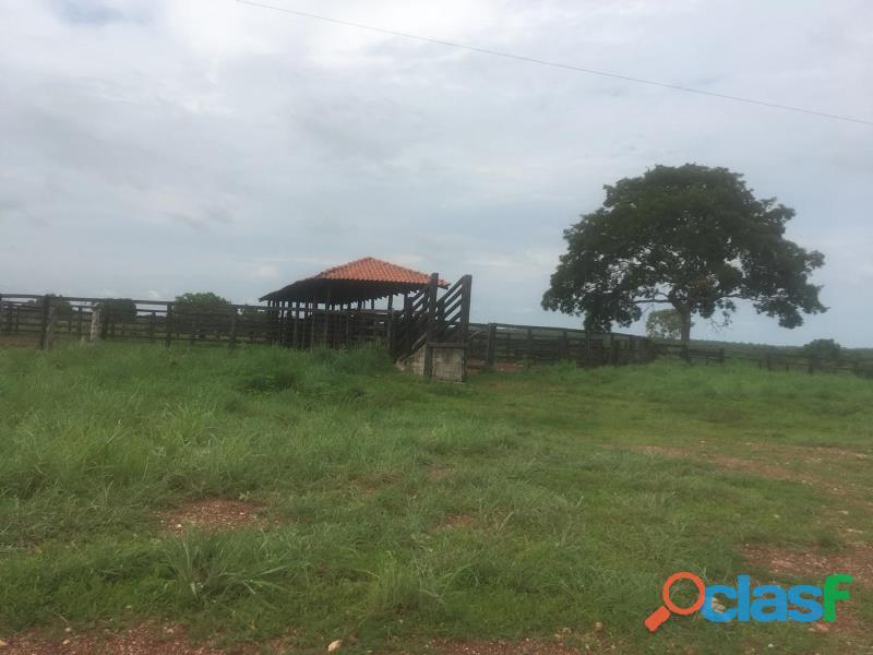290 Aqs Excelente Pra Gado Bem Montada São Miguel Do Araguaia GO 5