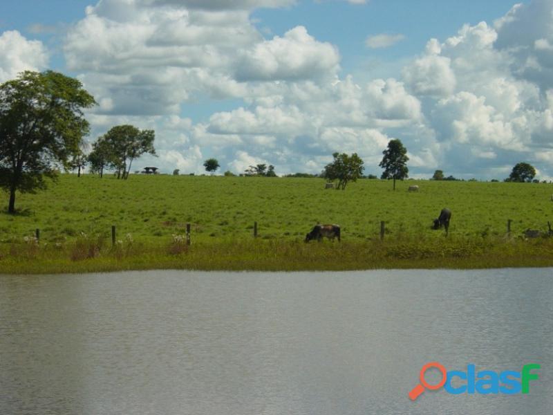 290 Aqs Excelente Pra Gado Bem Montada São Miguel Do Araguaia GO 6