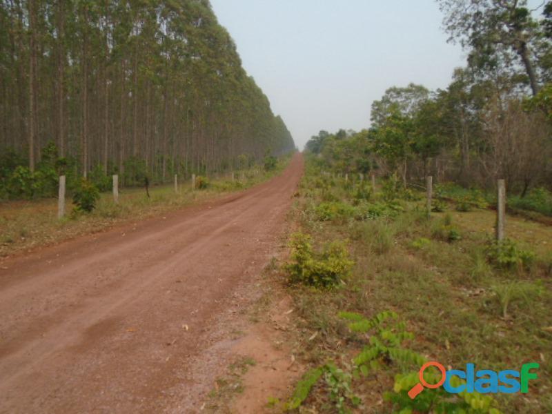 846 Alqs Região Lavoura 200 Abertos 100 Plantado Darcinópolis TO
