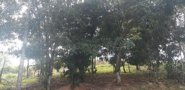 Terrenos terreno / lote com venda por r$20.000