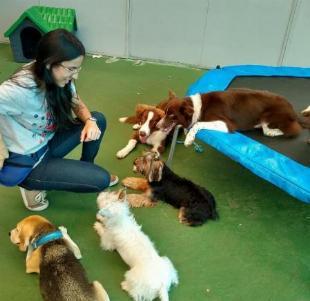 Escolinha canina - creche para cães
