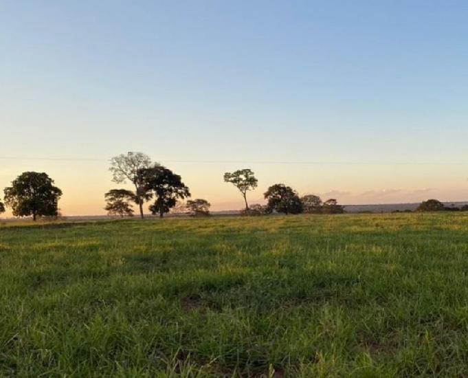 Excelente fazenda com 856 alqueires na região cassilândia
