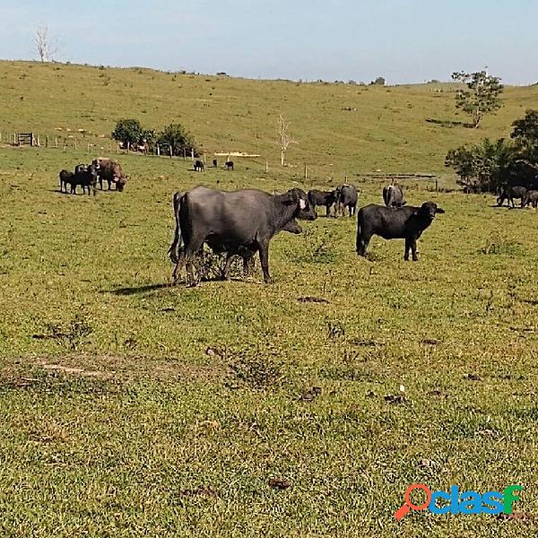 Fazenda p gado de corte *** oportunidade***