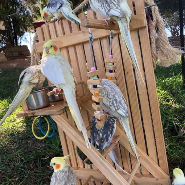 Play para aves calopsitas agapornes periquitos etc